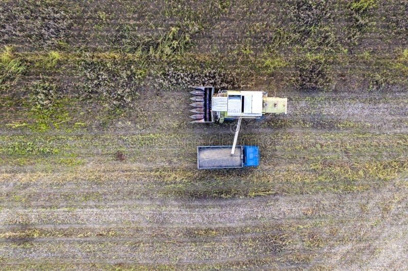 Combine harvester uploads harvest sunflower grains to dump truck. Harvesting season. Agriculture scene. Agricultural harvest field royalty free stock images