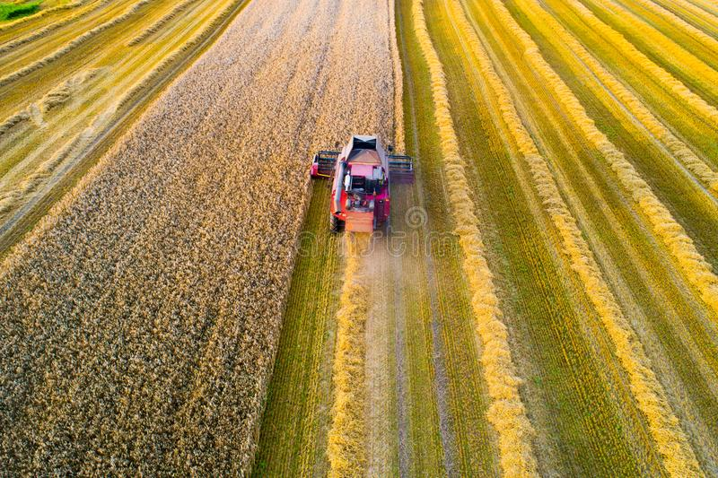 Combine harvester at work. Harvester is reaping wheat. In the evening stock photography