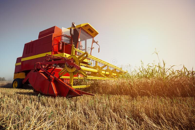 Combine harvester working on the wheat field. On the blue sky stock photo