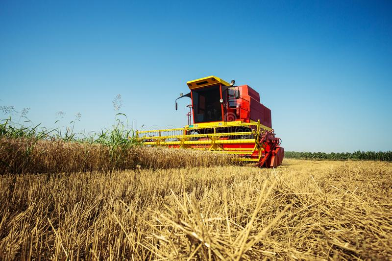 Combine harvester working on the wheat field royalty free stock image