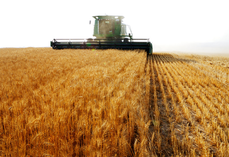 Download Combine harvesting stock image. Image of farm, spikes - 3957213