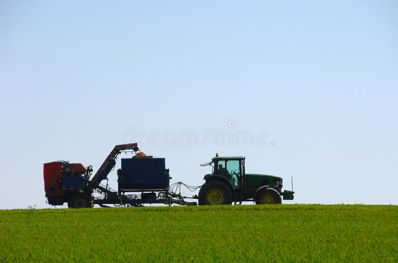 Combine harvesting carrots in green field royalty free stock image