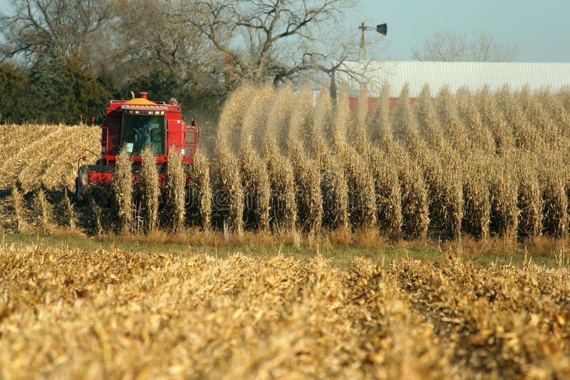 Download Combine harvesting corn stock image. Image of combine - 11699749