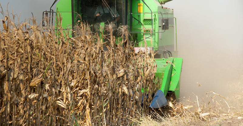 Download Combine harvesting corn stock image. Image of picking - 22570031