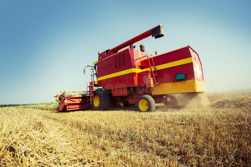Combine harvesting in a field of golden wheat. On the blue sky royalty free stock images