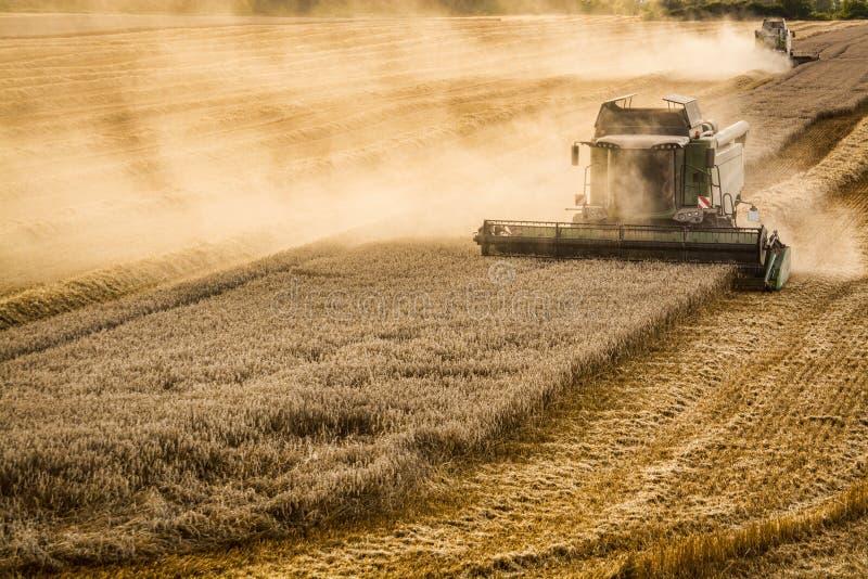 Combine harvesting grain in Czech republic royalty free stock photos