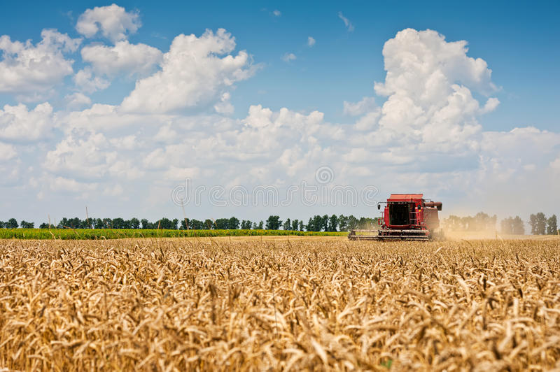 Download Combine harvesting wheat. stock photo. Image of agricultural - 32262974