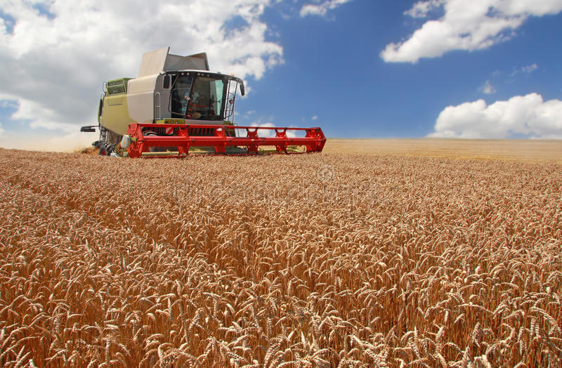 Download Combine Harvesting Wheat Royalty Free Stock Photo - Image: 32380765