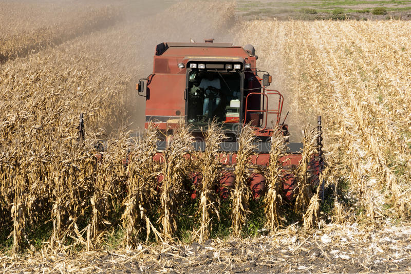 Download Combine Harvests Corn stock image. Image of harvesting - 39084937