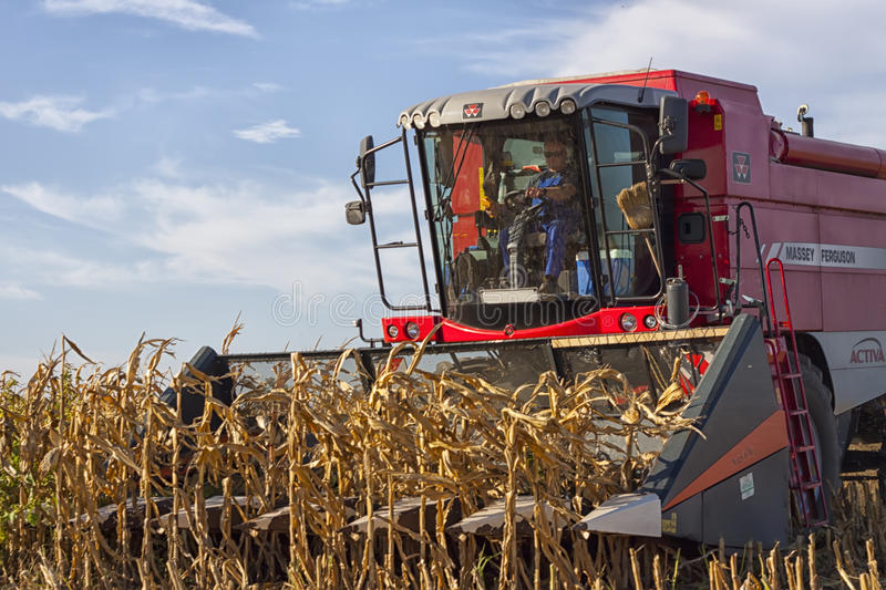 Combined Harvester. Harvesting a crop of maize in a rural environment stock images