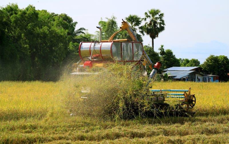 Combineer Machine het Oogsten in Gouden Paddy Field stock foto