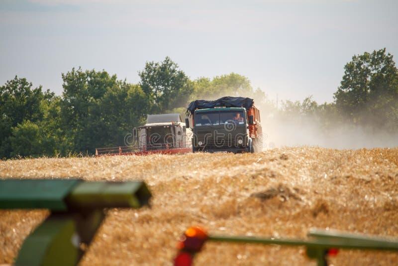 Combinez la moissonneuse et la commande de KAMAZ le long d'un champ de blé et d'un blé de récolte photographie stock libre de droits