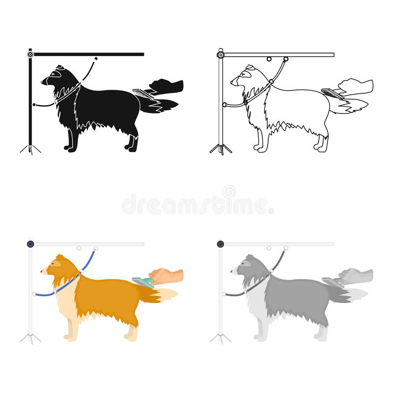 Combing a pet`s fur, a dog in a stylish salon. Pet,dog care single icon in cartoon style vector symbol stock. Combing a pet`s fur, a dog in a stylish salon. Pet stock illustration