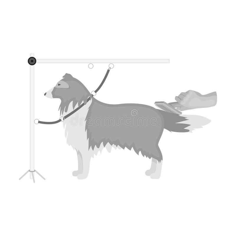 Combing a pet`s fur, a dog in a stylish salon. Pet,dog care single icon in monochromt style vector symbol stock. Combing a pet`s fur, a dog in a stylish salon royalty free illustration