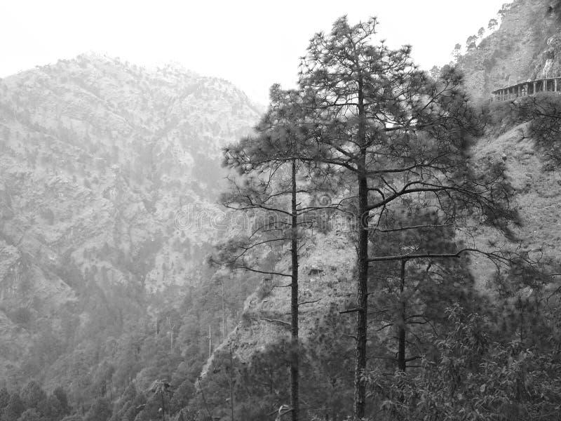 Combini la foto della montagna e della foto impressionante degli alberi cliccate a jammu fotografie stock libere da diritti