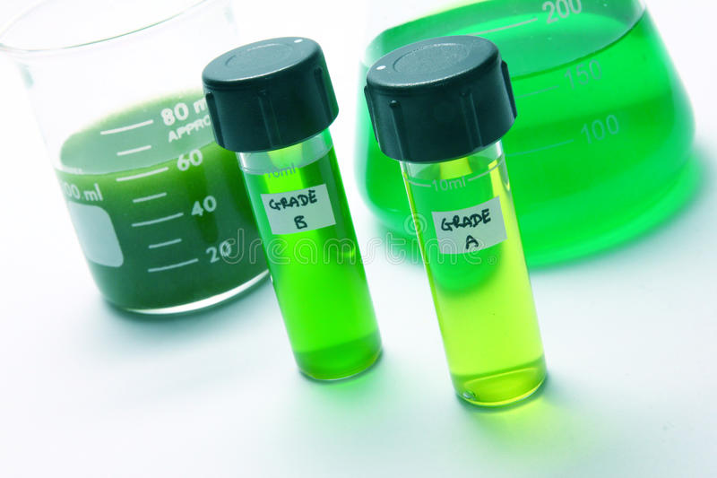 Combustível biológico das algas fotografia de stock