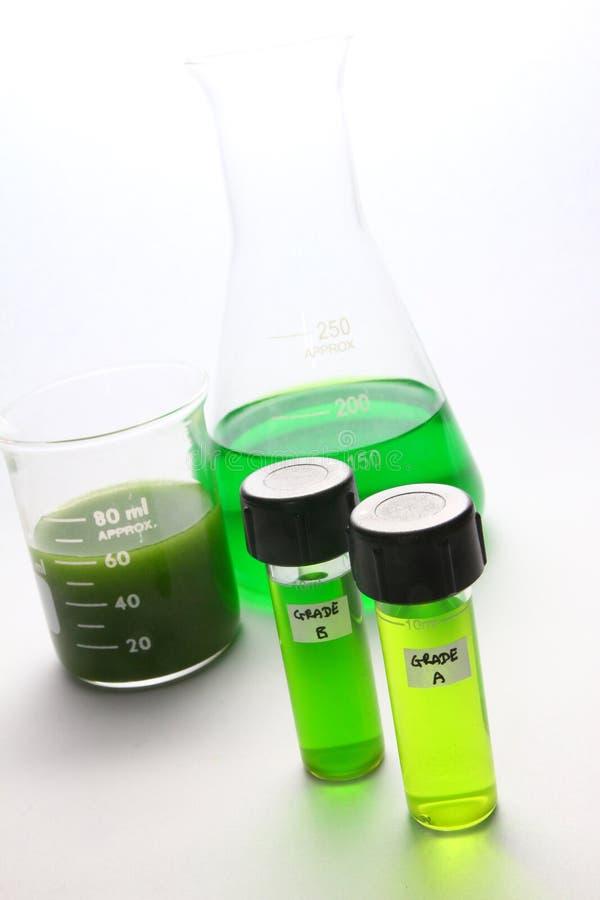 Combustibile biologico delle alghe immagine stock libera da diritti
