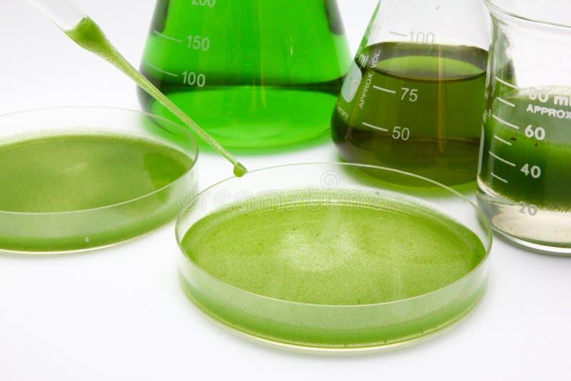 Combustibile biologico delle alghe fotografie stock