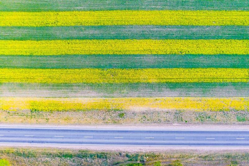 Comcept di agricoltura Coltivazione della colza su terreno coltivabile in Europa fotografia stock libera da diritti