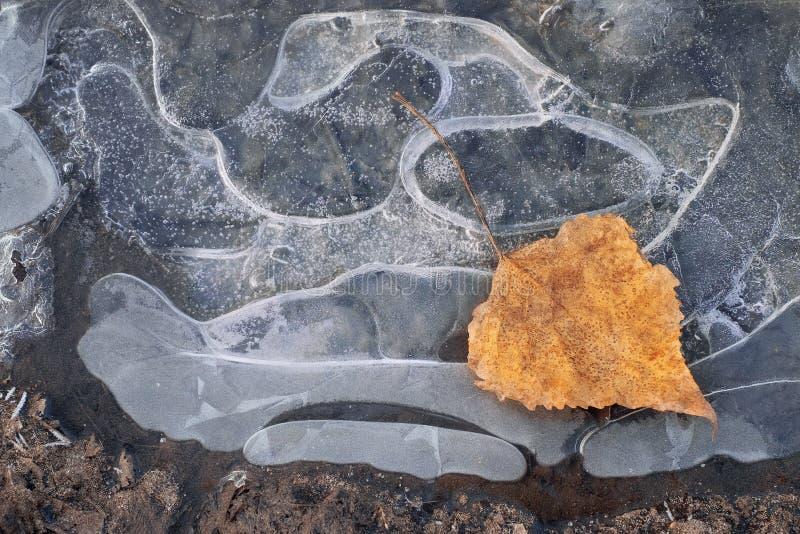 Começo da abstração do inverno, fim do outono foto de stock
