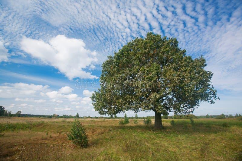 Começo de setembro do outono paisagem com o carvalho do grenn no campo natureza - em ensolarado Vista pitoresca dentro imagens de stock