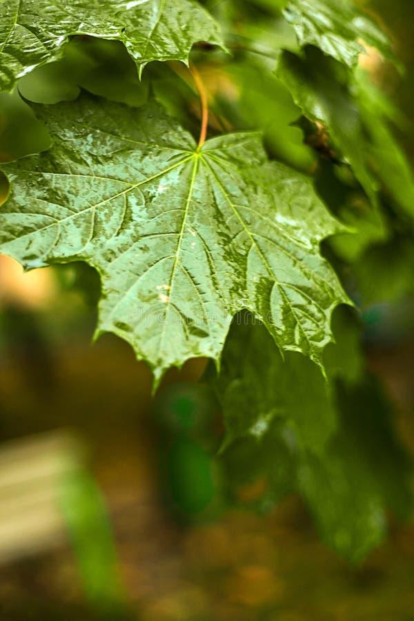 Começo do outono Seque as folhas, chuva, exterior imagem de stock royalty free
