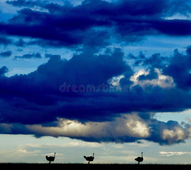 Come il sole mette a Mara masai fotografia stock libera da diritti