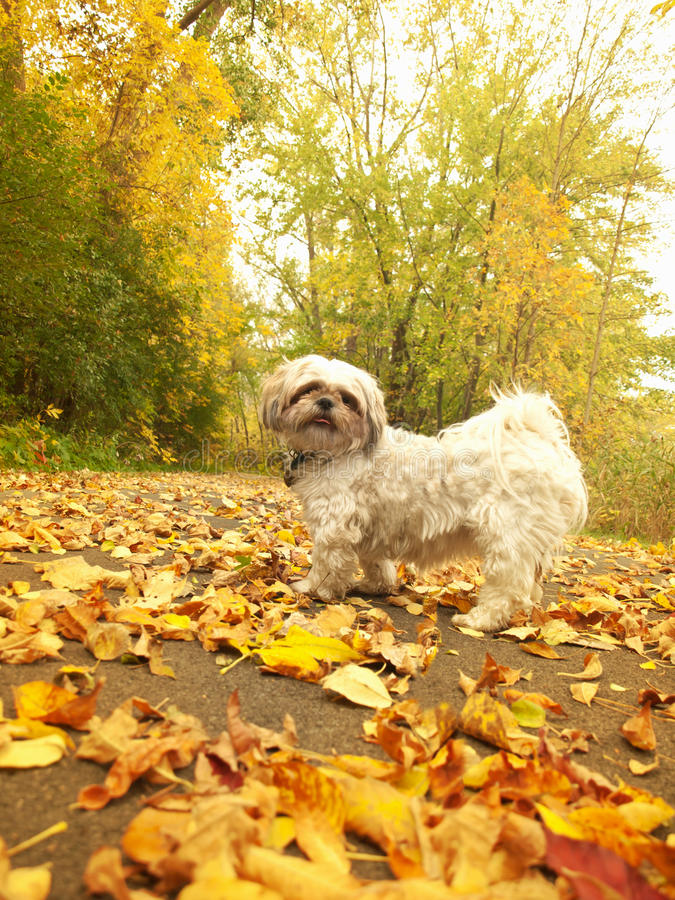Download Come on,lets go stock image. Image of autumn, fall, angel - 27056151