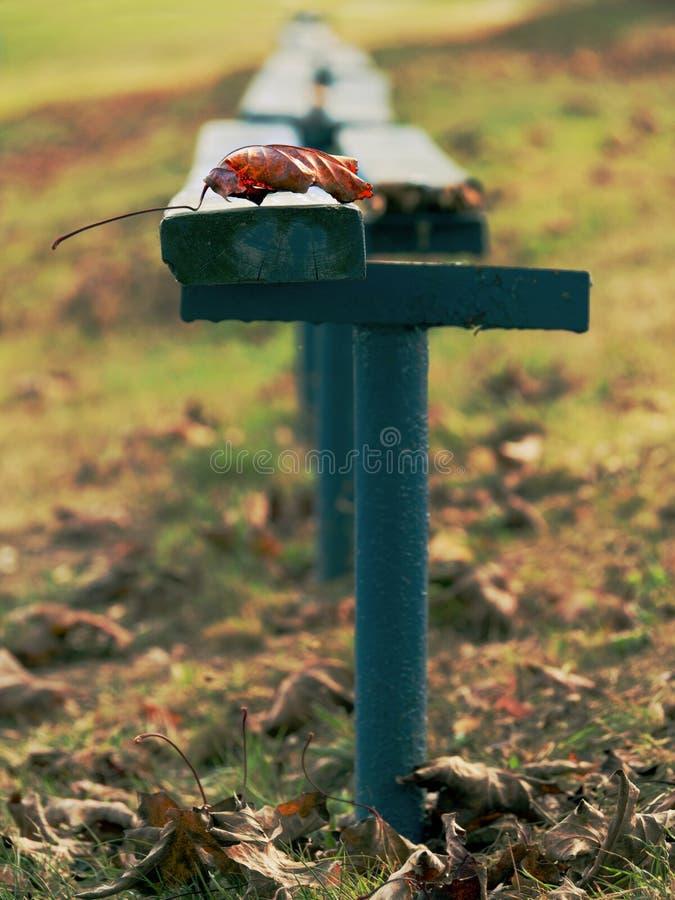 Come?o das folhas de outono amarelas pequenas do tempo do outono no banco fotos de stock