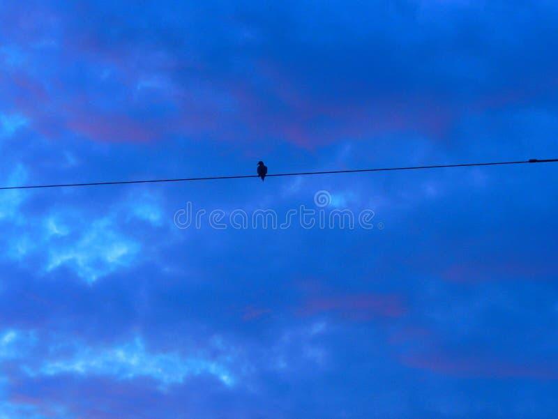 Come un uccello su un cavo fotografia stock