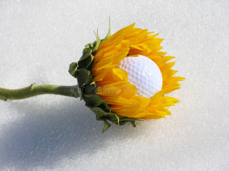 Download Comedor da esfera de golfe imagem de stock. Imagem de sunflower - 540689