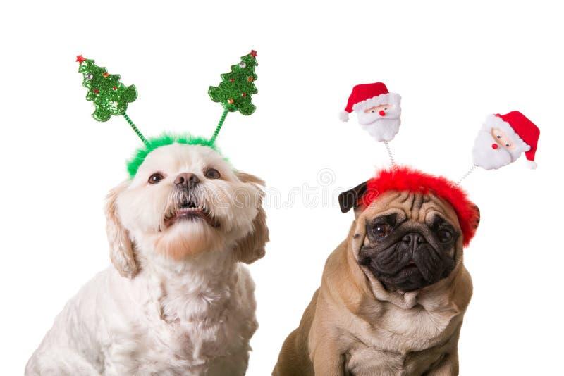 Comemorando cães com decoração do Natal foto de stock royalty free