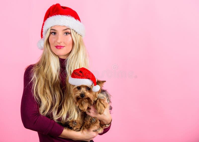 Comemore o Natal com animais de estimação Natal do amor da razão com animais de estimação Maneiras de ter o Feliz Natal com anima fotos de stock royalty free