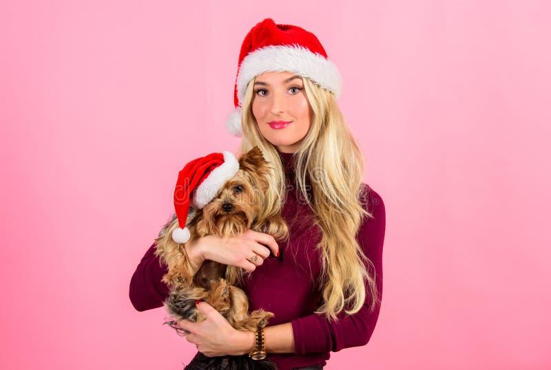 Comemore o Natal com animais de estimação Natal do amor da razão com animais de estimação Maneiras de ter o Feliz Natal com anima foto de stock