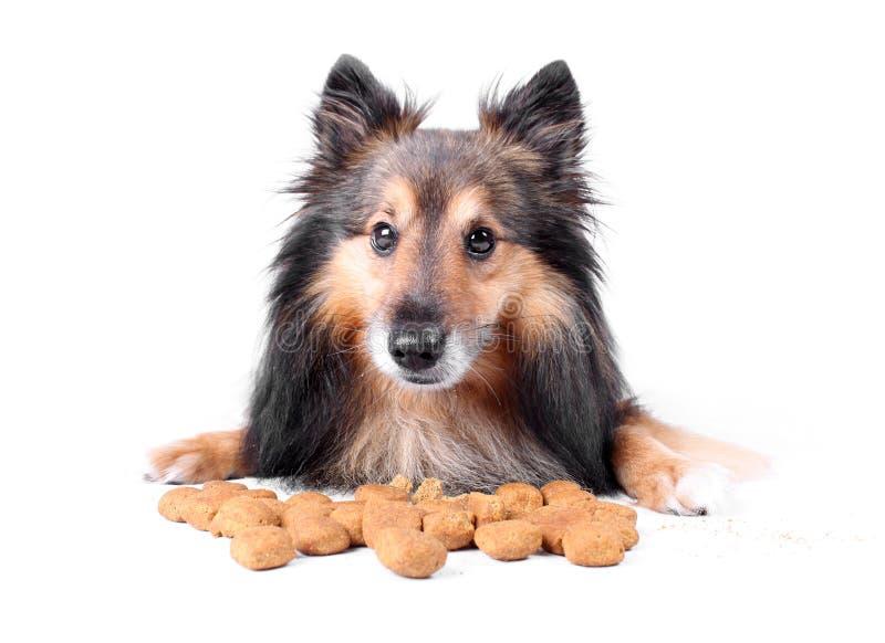 Comendo o cão imagem de stock