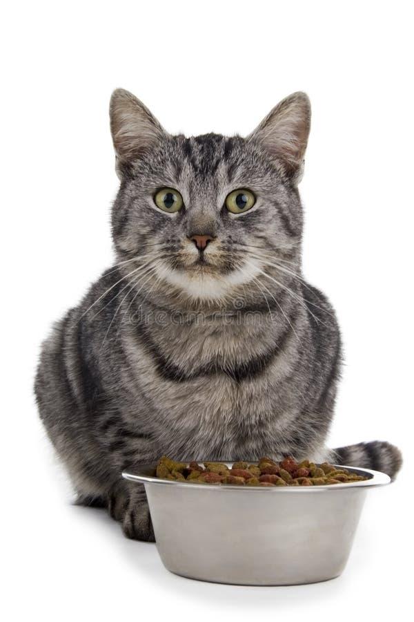 Comendo o gato imagens de stock