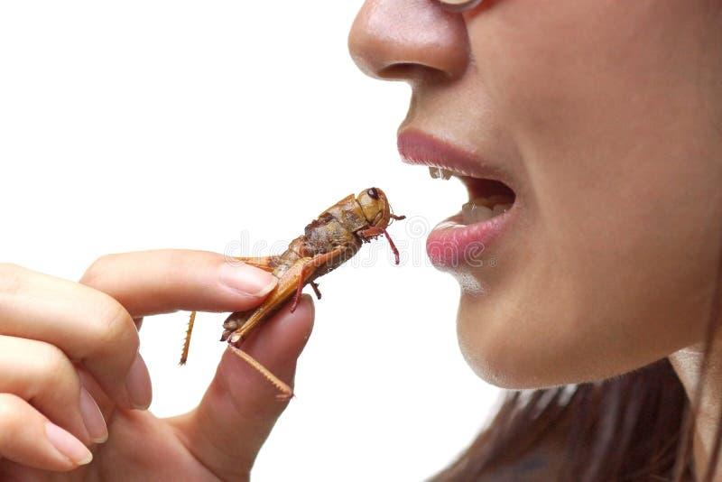 Comendo o inseto fotos de stock royalty free