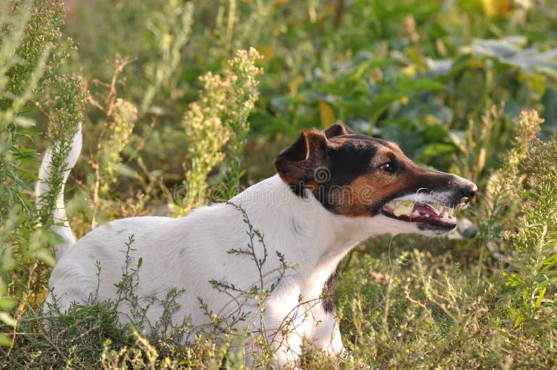 Comer do cão fotografia de stock