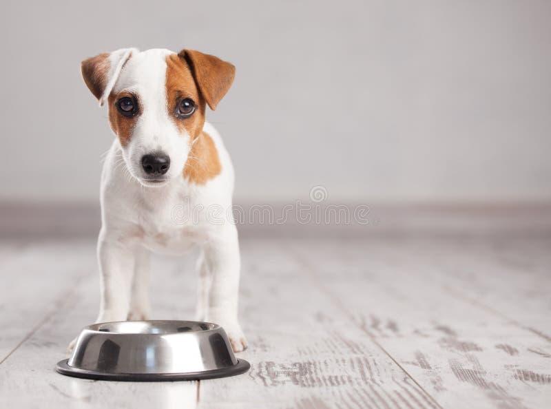 Comer do cachorrinho fotos de stock