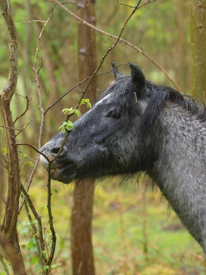 Download Comer do cavalo selvagem imagem de stock. Imagem de selvagem - 29836499