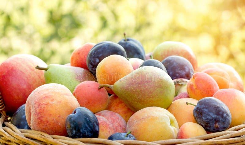 Comer saudável - frutos orgânicos frescos fotos de stock royalty free