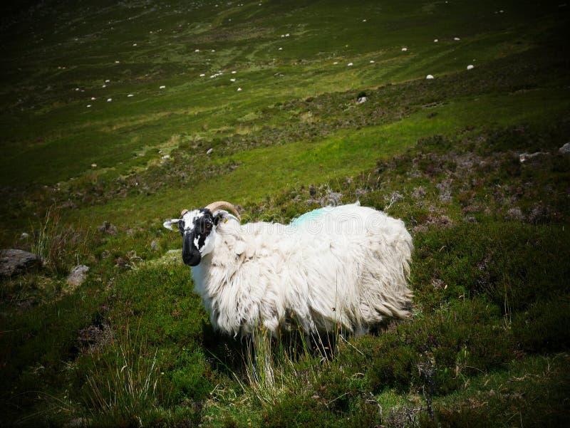 Comeragh berg fotografering för bildbyråer