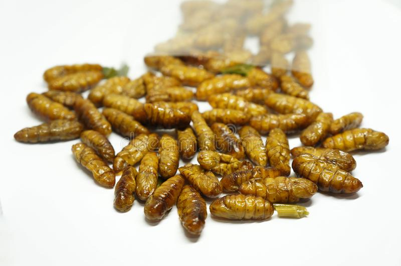 Close-up on edibles Silkworms. Comestibles insects out of a plastic bag, on a white background royalty free stock photo
