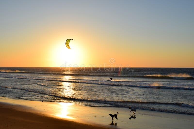 Cometa del Windsurfer delante del sol en la playa con los perros fotografía de archivo libre de regalías