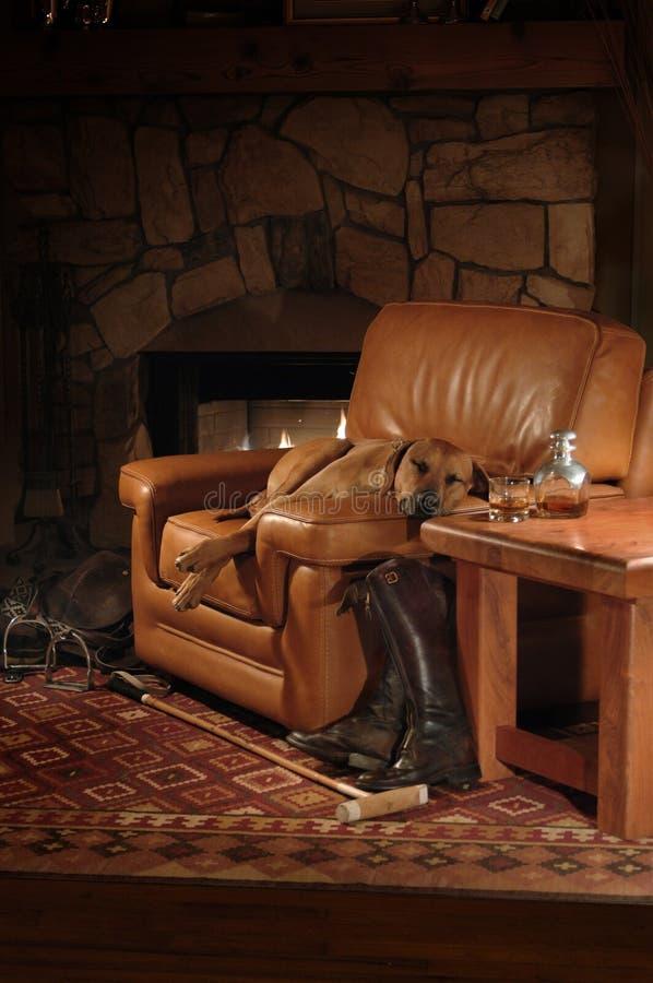 Comfortabel huisdier op stoel royalty-vrije stock foto's