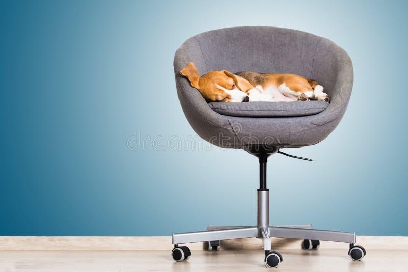 Comfortabel kantoormeubilair royalty-vrije stock afbeelding