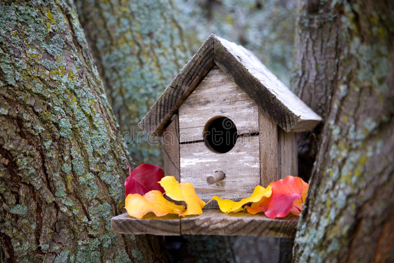 Comfortabel Vogelhuis stock afbeeldingen