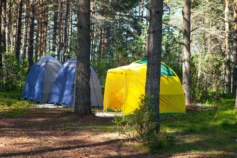 Comfortabele openluchtrecreatie Drie kleine technische het kamperen tenttribunes in schaduw van pijnboombos, weer is zonnig De zo royalty-vrije stock foto