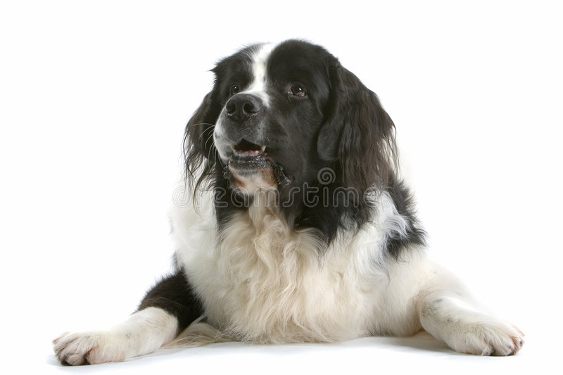 Download Comfortable Canine stock photo. Image of alert, devoted - 2203268