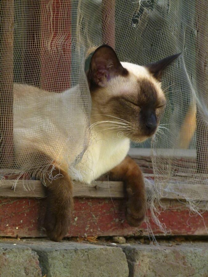 Comfortable cat in window stock photo